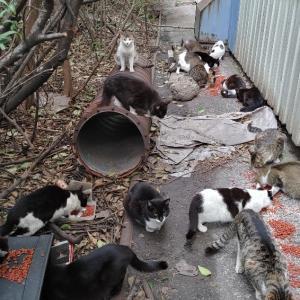 人工島で苦しみ続けている200~1000匹の猫達を助けてください!