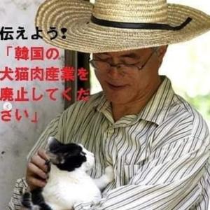 韓国 「犬屠殺禁止法」制定を求める署名