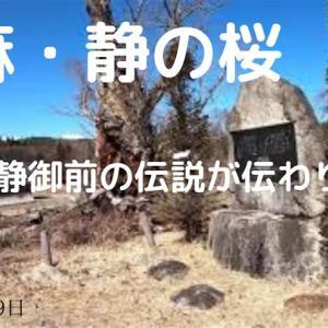 美麻・静の桜(2020年3月9日)