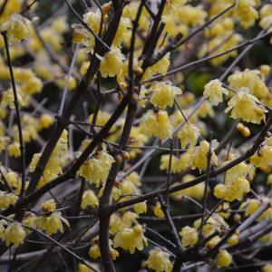 一月末の庭の花々