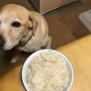 ご飯(白米)を炊く時に、あえて糠を入れてみた! 白米は味気なくて物足りない!