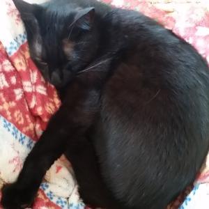最強に自由な生き物、猫!特にロカ様(*'ω'*)