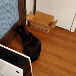 幸運の招き猫=ロカ様