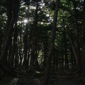 木下闇 幹に顔 浮かびけり