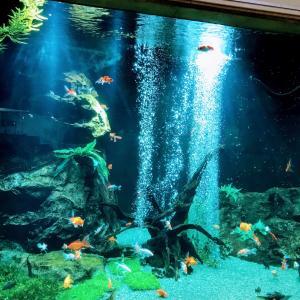 コロナ対策ばっちし!!!雨の日お出掛け、足立区生物園に行ってきました!!!!
