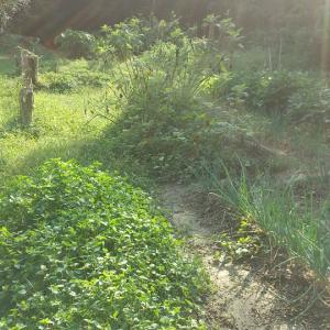 耕作放棄地の第2畑