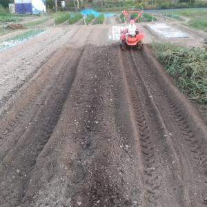 昨日収穫した安納芋の畝を耕転