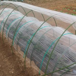 イチゴ畝にトンネルを張りました