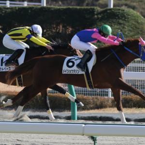 第12回 レパードS GⅢ 注目馬①
