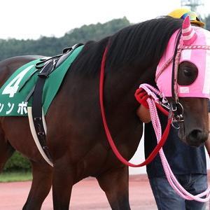 第68回 神戸新聞杯(G2)注目馬