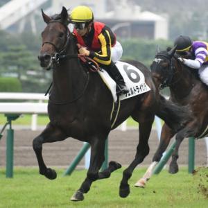 第81回 菊花賞(G1)全馬追い切りコメント&推奨馬