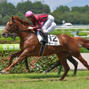 第7回 京都2歳S(G3)全馬追い切りコメント&推奨馬