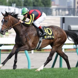 第54回 ステイヤーズS(G2)追い切りコメント&推奨馬