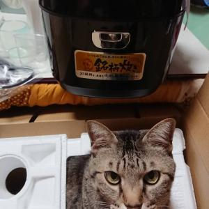 新しい炊飯器よ!頼むでヽ(;▽;)