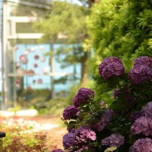 国営ひたち海浜公園の開花情報看板が真っ白でも、咲いているお花があることを知ってましたか。
