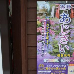 見頃だというので、鷲子山(とりのこさん)霊峰あじさいを見に行ってきた。