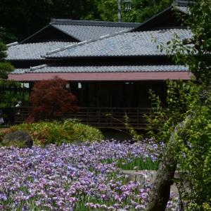 西山の里桃源にある花菖蒲が見頃だというので行ってきた。