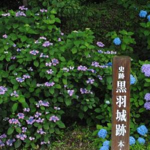 過去の話part13 ちょっと遠めの紫陽花を見に行っていたこともありました。