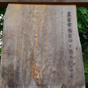【中編:極楽寺の野中ザクラ、向ノ島公園】たきがしら湿原の蛍を見に行く