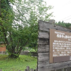 国指定天然記念物となっている桜の樹齢をざっくり一覧化してみた。