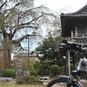 クロスバイクと阿弥陀寺しだれ葉桜