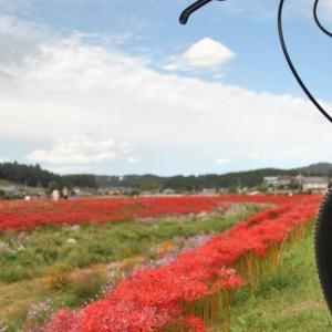 クロスバイクで源氏川沿いにある彼岸花を見に行ってみた