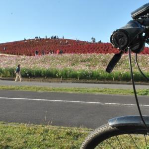 クロスバイクで国営ひたち海浜公園の色付いたコキアを見に行ってみた