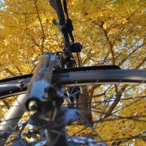 クロスバイクで国営ひたち海浜公園のコキア終了後と紅葉を確認しに行ってみた