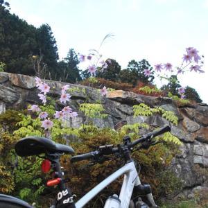 クロスバイクで常陸太田市町屋町・西河内下町を巡ってみた