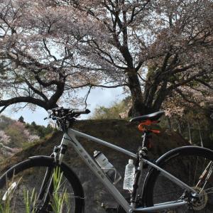クロスバイクで西河内中町お越し場の桜を見に行ってみた