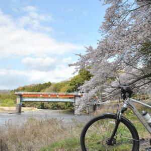 クロスバイクで田渡堰の桜など桜巡りしてみた