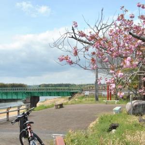常陸太田市新落合橋、他の堤防補強工事など見ながらサイクリング