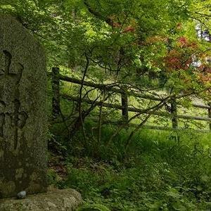常陸太田市徳田町「猿喰のケヤキ」「山神」を3回訪れた
