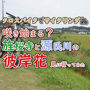 クロスバイクで旌桜寺と源氏川の開花前の彼岸花を見に行ってみた