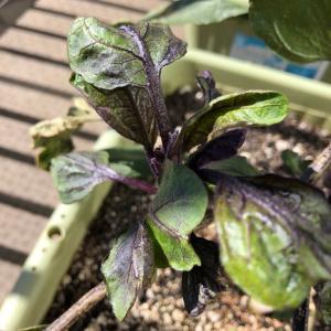 チャノホコリダニに効く農薬を紹介!予防が必要なナスやイチゴに注意!