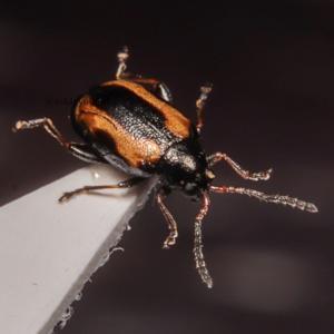 畑の葉っぱの虫食いは葉虫の可能性!被害・対策・駆除の方法を紹介!
