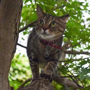 虎は木登り好き