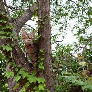 木から木へ