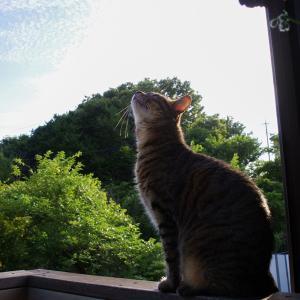 空模様と猫模様