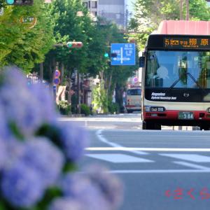 【長電バス】984号車 紫陽花