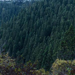 早期退職生活 木々の生命力