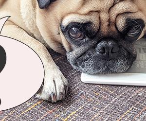 海外ペットニュース: 犬に氷をあげていいか問題
