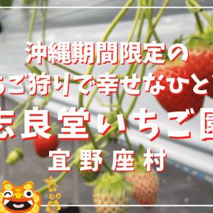 【沖縄】宜野座村 志良堂いちご園のいちご狩り体験で幸せなひと時を堪能