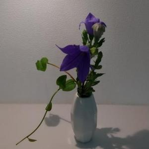 【花のある暮らし】紫のききょうと一緒にかざったのは、意外なあるもの、でも素敵だったんです。