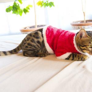 猫服の簡単な手作り方法!コスプレもハンドメイドしよう
