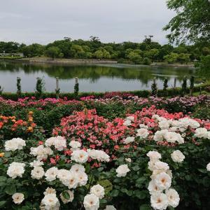 「蜻蛉池公園バラ園」メルヘンの世界へ行ってきました2020年5月
