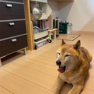 梅雨の季節の大掃除。キッチンもすっきりしました。