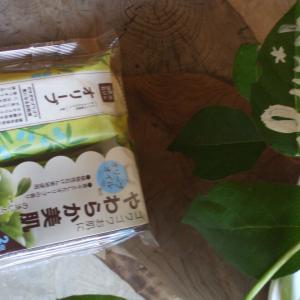 ペリカン石鹸の🐦自然派石鹸🛀オリーブ🌳石鹸派に(*'▽')全身に使える石鹸です🛁