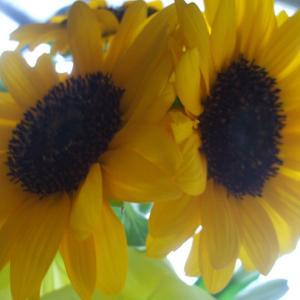 ひまわり🌻花言葉 あなたをみつめる🌻すかしゆり🌺花言葉 飾らぬ美🌺スプレーマム❁花言葉 清らかな愛❁