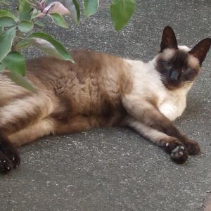 庭仕事を監督するネコさん(=^・^=)このスタイルを😺ちょくちょく見かけます👀